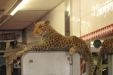 peck_leopard72